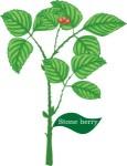 Plant motif stoneberry berry