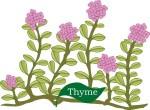 Plant motif thyme herb
