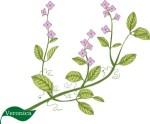 Plant motif veronica herb