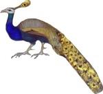 peacock bird motif medieval