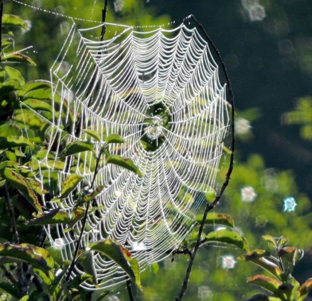 070115 Ken Gagne Yachats River Road Web