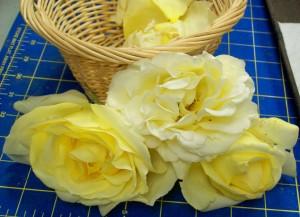 071615 YellowRoses