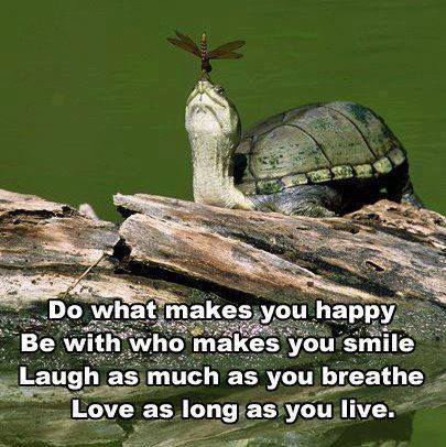 Do happy turtle wise