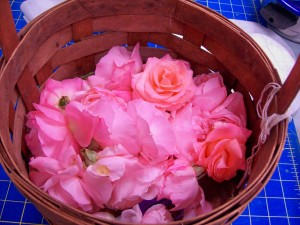 090715 Rose