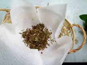 091715 Lovage seed