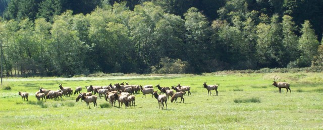 091815 Elk