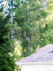 091815 Spiderweb