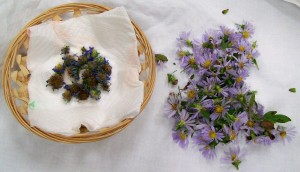 092615 Asters