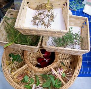 1001515 Herbs