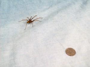 100515 Spider