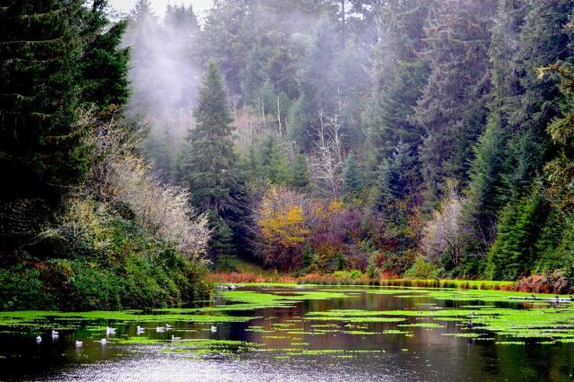 110215 Ken Gagne Goose Pond Waldport