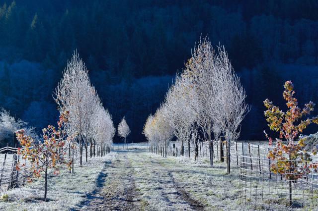 112915 Ken Gagne Yachats Frost