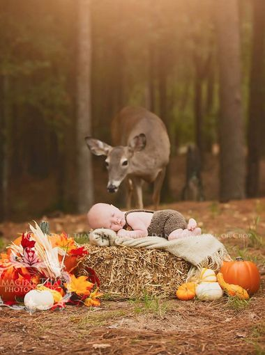 Baby Deer autumn wise