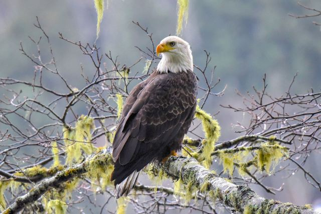 122215 Ken Gagne Eagle