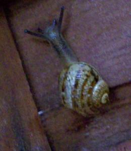 021516 Snail2