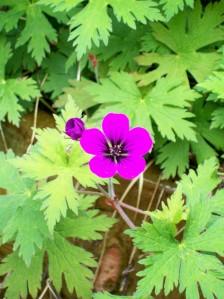 041116 Flower purp