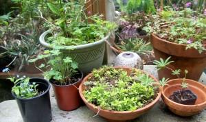 041116 Plants2