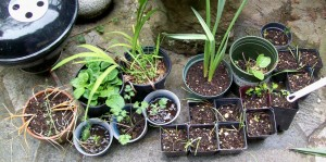 041116 Plants3