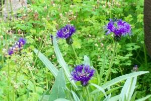 041316 Flower1