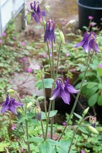 041316 Flower5
