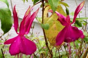 041316 Flower6