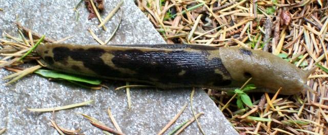 041316 Slug