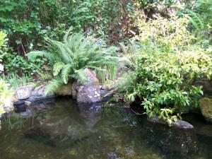 042116 Pond