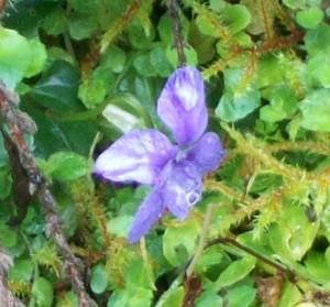 042216 Violet