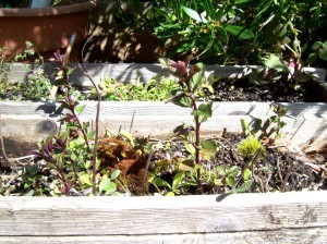042616  Herbs