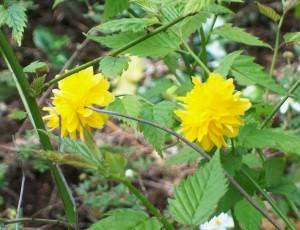 041716 flower