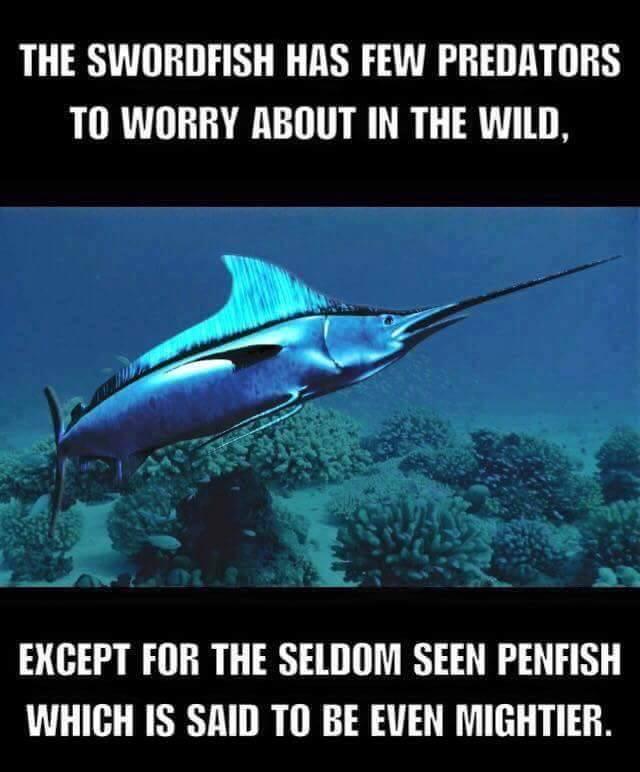 SwordfishPen funny