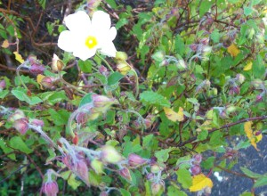 050216 flower2