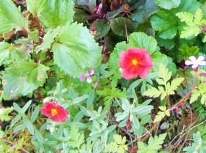 050216 flower5