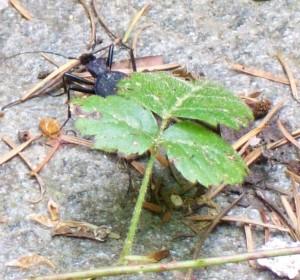 050316 Beetle