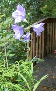 050316 flower2