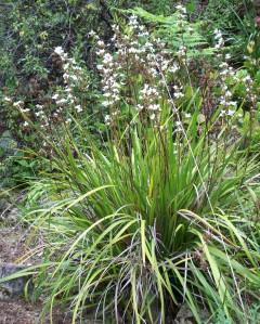 050416 plant 2