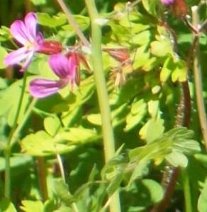 051016 flower2