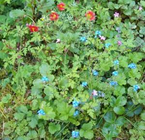 051016 Flowers