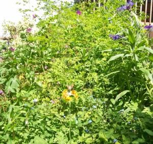 051016 Garden