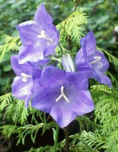 051216 Flower1