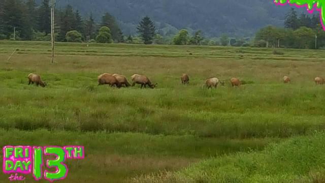 051316 Elk