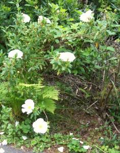 051316 flower1