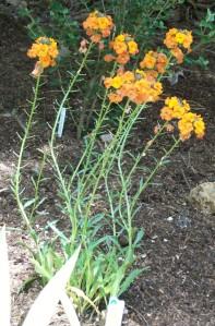 051816 flower 09