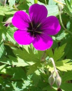 051816 flower 11