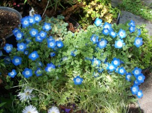 051816 flower4