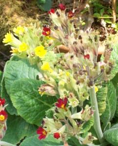 051816 flower7