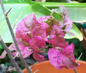 052116 Flower1