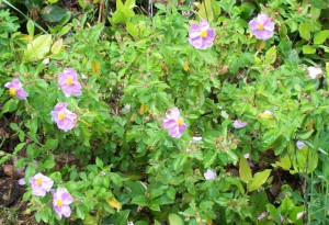 052416 flower5