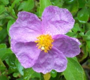 052416 flower6