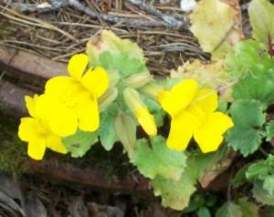 052616 flower1